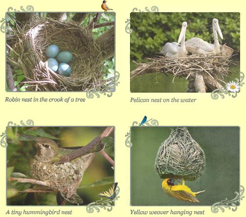 Four nests