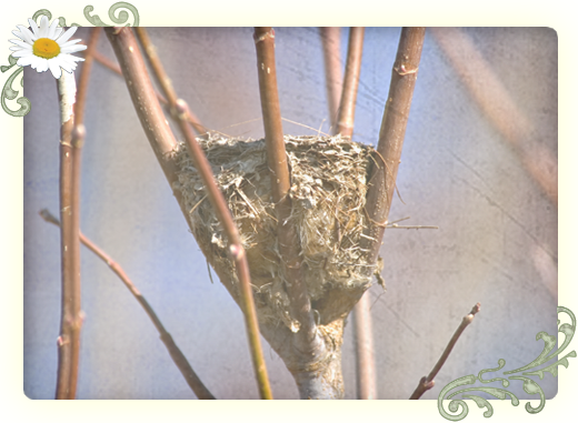 a nest woven into dogwood branches